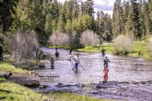 Members of the Burns Paiute Tribe spread out in the river. (Photos by Andi Harmon)